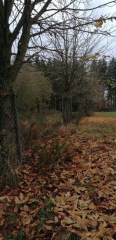 Kastanien als Ablenkfütterung für Rotwild